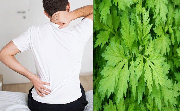 Lá ngải cứu được chứng minh là có tác dụng kháng viêm và giảm đau hiệu quả