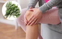 5 cách chữa đau xương khớp bằng ngải cứu cho hiệu quả bất ngờ