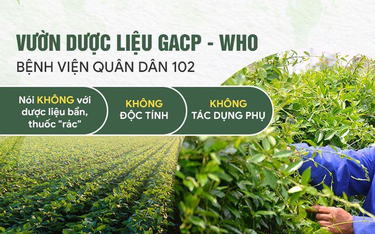 Vườn dược liệu đạt chuẩn GACP - WHO tại Quân Dân 102