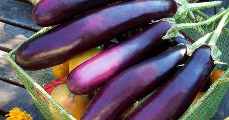 Cà tím là vị thuốc Nam được dân gian đánh giá cao
